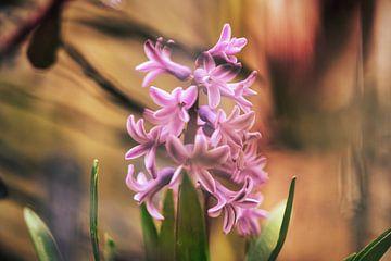 Frühlingsboten von Foto Oger