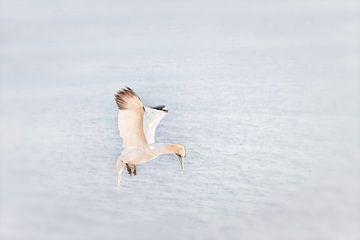 Jan van Gent  von Ingrid Van Damme fotografie