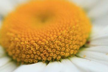 Hart van een margriet van Bärbel Severens