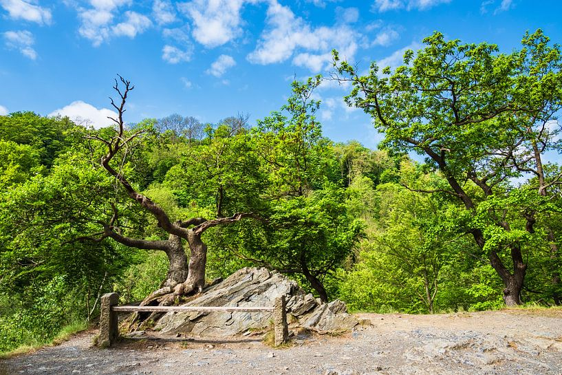 Landscape with trees and rocks in the Harz area, Germany van Rico Ködder
