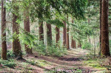 Stiller Waldweg von Mark Bolijn