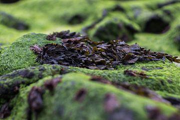 Zee algen op rots van Johan Dingemanse