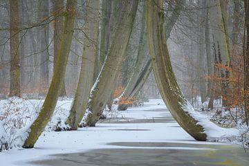 Winter Beukenbos met bevroren beek van Peter Bolman