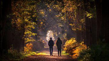 Gouden hersftkleuren in Nederland van piet douma