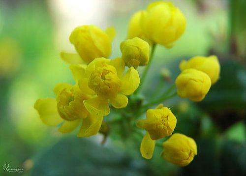 Yellow Flower van Ruxandra Proksch
