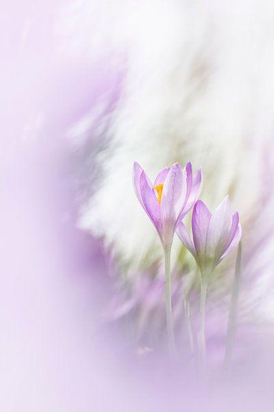 Lovely Nature van Bob Daalder