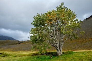 De mythologische boom van Sandfell in IJsland van Gerry van Roosmalen