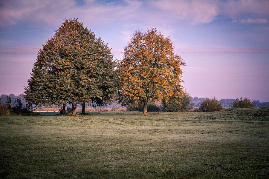 Prachtige bomen in het Twiske van Jaap Mulder