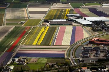 Luchtfoto van bloembollenvelden bij Noordwijk-Noordwijkerhout van