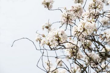 Blüte im Park in Sittard | Frühlingstag von Wendy Boon