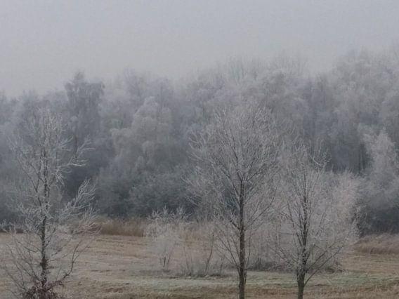 Bevroren bomen in de winter. van Mark Nieuwkoop