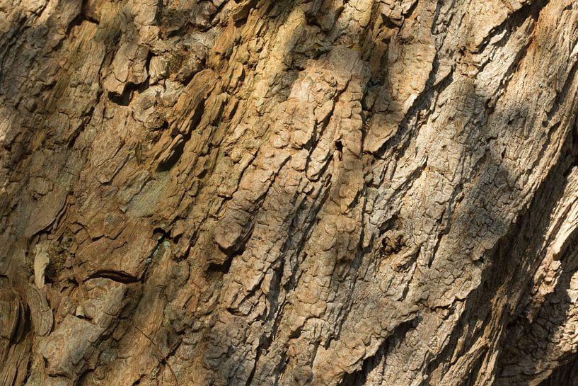 Boomschors houtdecor van Art Wittingen