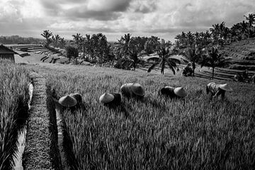 Zwart wit foto van arbeiders in rijstveld Bali van Ellis Peeters