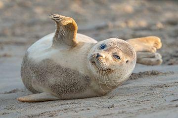 Zeehond op het strand van Hans Overduin