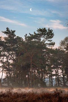 Morgenglühen in Buurserzand von Jeroen Brasz