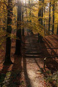 Herfst droom van Nina Rotim