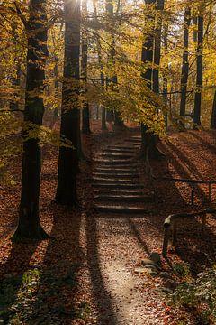 Herbsttraum von Nina Rotim