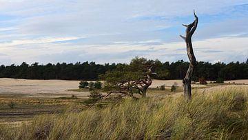 Zicht over over een zandverstuiving van Gerard de Zwaan