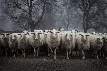 Vorsicht vor den Schafen von Bert Mensink