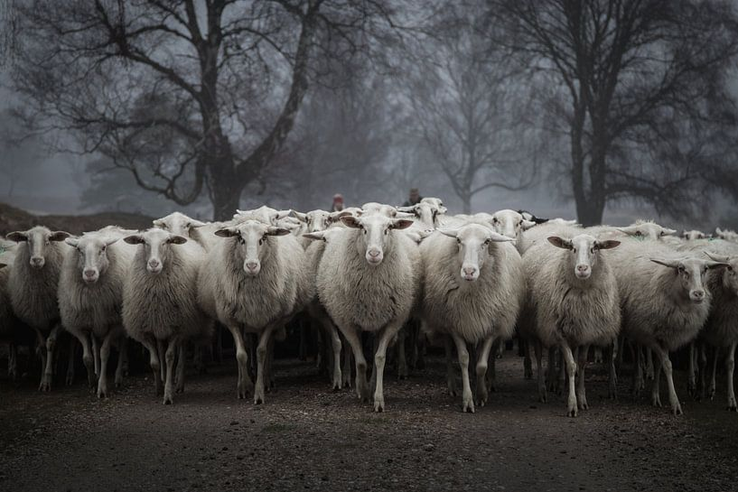 Beware of the sheep van Bert Mensink