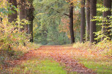 tapijt van herfstkleuren van Tania Perneel