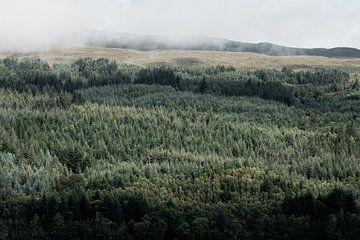Blick vom Loch Ness auf einen schönen Wald von Thea.Photo