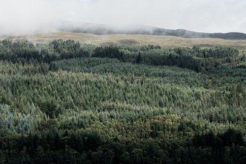 Uitzicht vanaf Loch Ness op een prachtig bos
