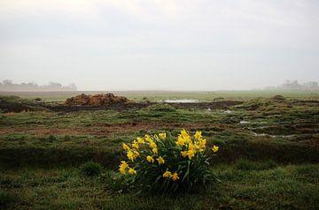 Texel Landschap 026 van Starworks Lien van der Star