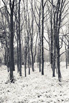 Koude winterdag van