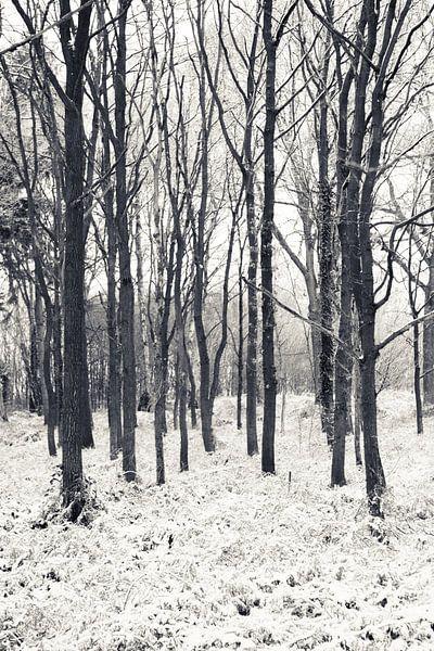 Koude winterdag