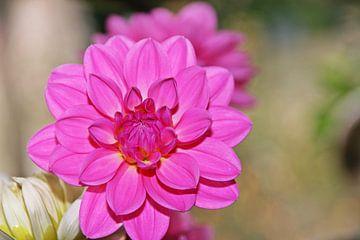 Gespiegelde bloem van Kirsten L.