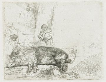 Die Sau, Rembrandt van Rijn.