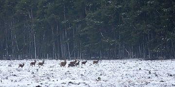 Edelherten in het bos von Evert Jan Kip