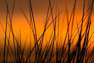 Zonsondergang in de duinen van Vincent van Kooten