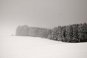 Witte Droom