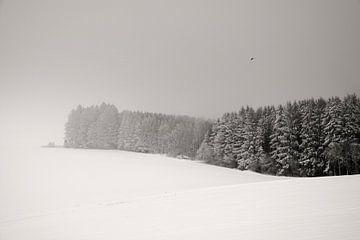 White Dream von Lena Weisbek