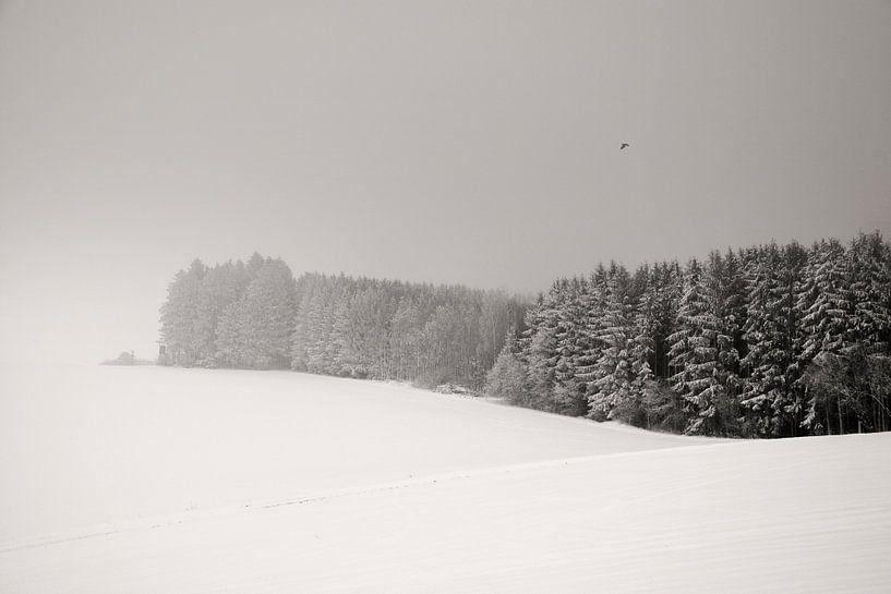Witte Droom van Lena Weisbek