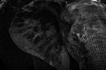 Leistungsstarker Elefant von Esther den Hollander