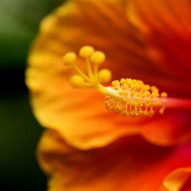 Macro oranje bloem van Carine Belzon