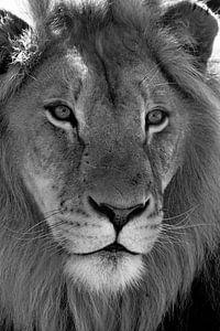Leeuw portret van
