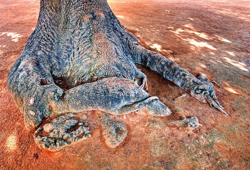 Aan de voet van de boom van Sigrid Klop