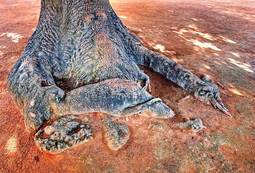 Aan de voet van de boom