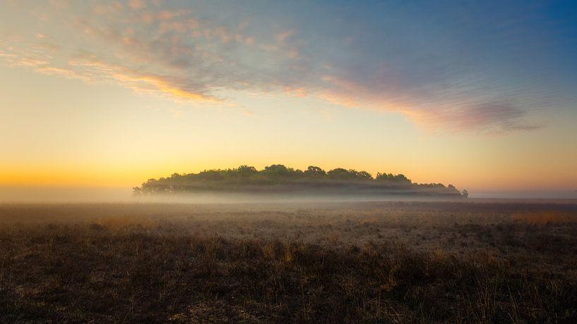 De wolk boven het bos in de mist van Anneke Hooijer
