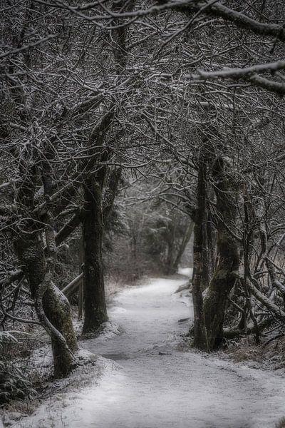 Ein Winterweg im Wald von Rik Verslype