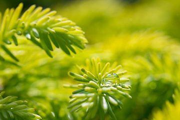 Die Träne der Natur von Jorn Wilms