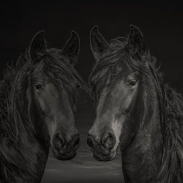 Chevaux, 2 chevaux westphaliens de différentes couleurs sur Gert Hilbink