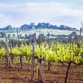 Wijngaard in Toscane von Anneke Hooijer