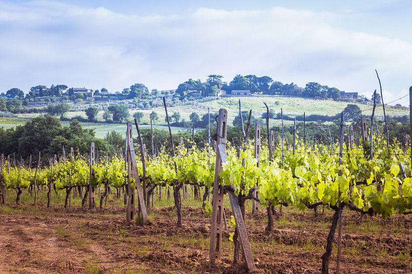 Wijngaard in Toscane van Anneke Hooijer