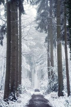 Welkom in Narnia van Martin Podt