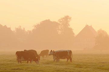Koeien in weiland (Friesland) sur Tjitte Jan Hogeterp